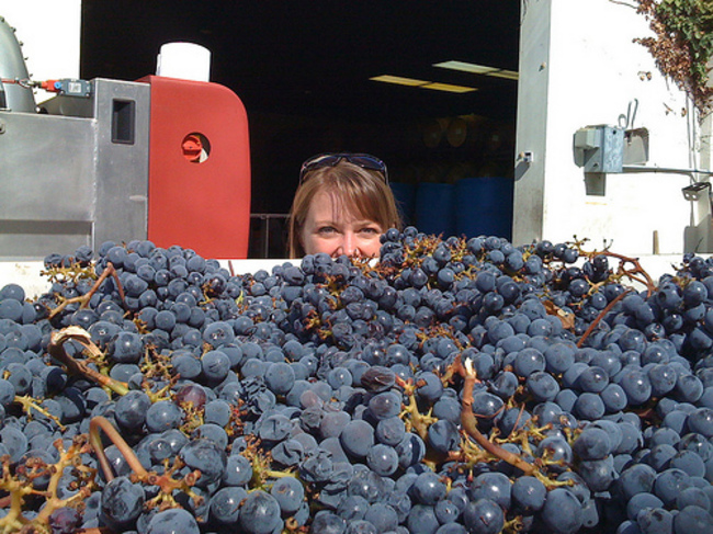 2008 Cabernet Sauvignon to be destemmed at Witch Creek Winery